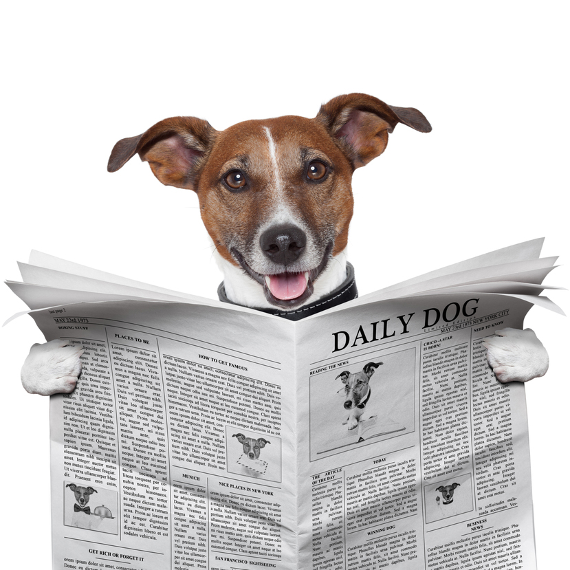 Lake Norman Dog Bark and Brew Weekly News! - Lucky Dog Bark & Brew
