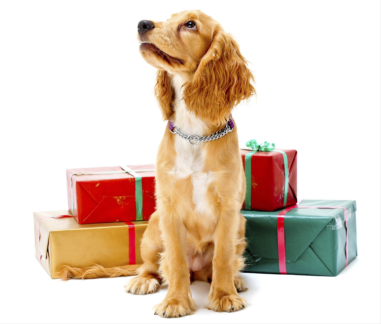 Puppy and Gifts