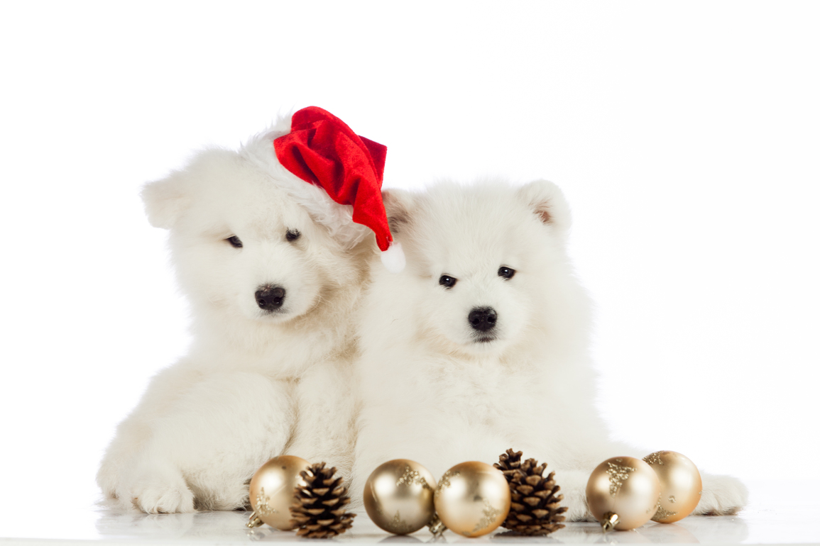 Christmas puppy.  Merry christmas