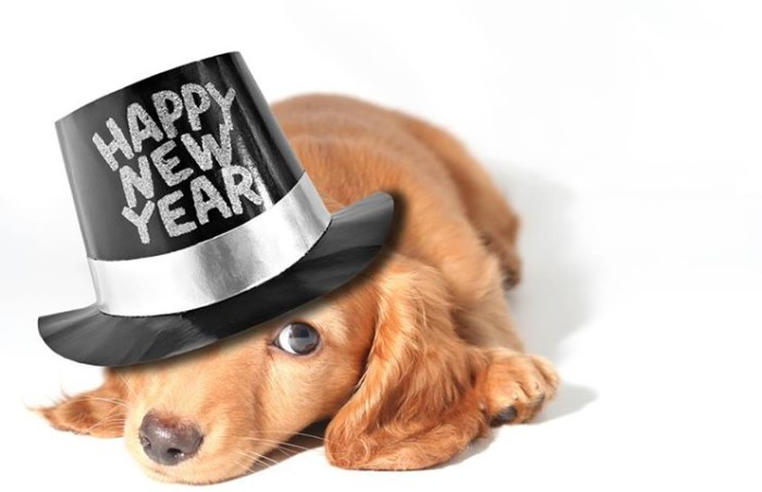 happy new years dog
