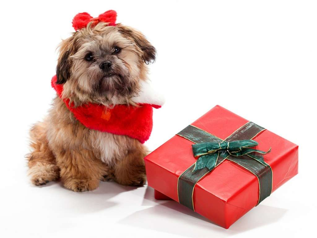 puppy-gift1