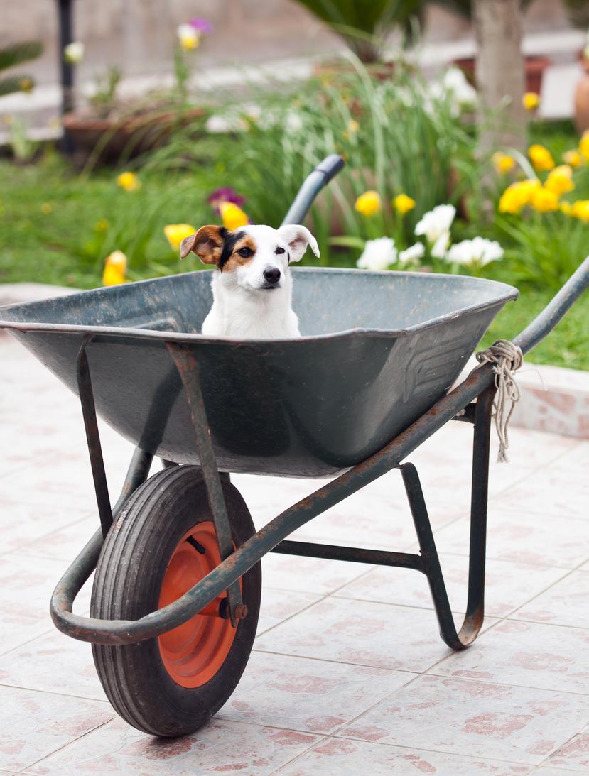 Dog-Safe Garden