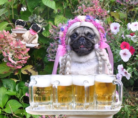 beer fest lkn