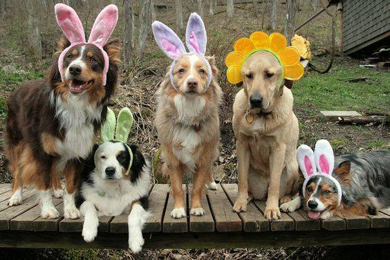 Easter Bunny Photos with CBHBB - Steele Creek! @ Lucky Dog Bark & Brew Steele Creek