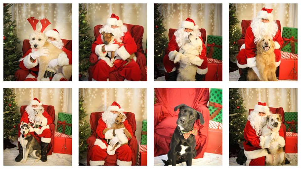 Santa Paws with Carolina Big Hearts Big Barks @ Lucky Dog Charlotte