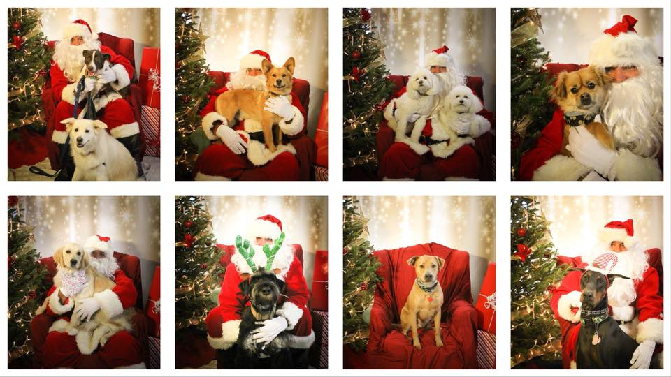 Santa Paws with Carolina Big Hearts Big Barks @ Lucky Dog Lake Norman