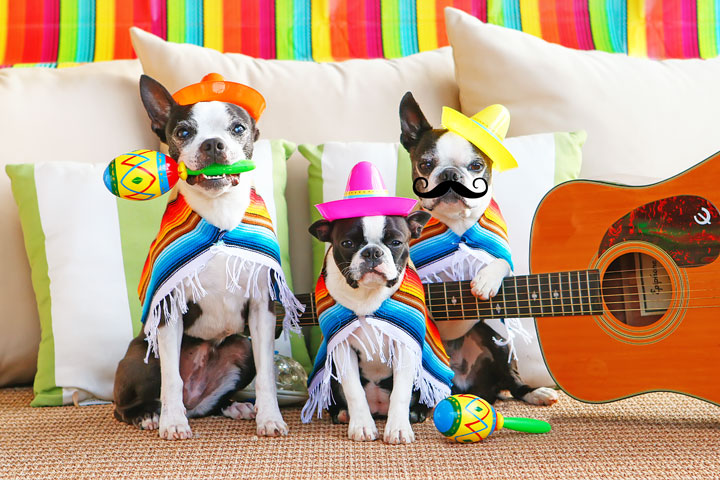 Cinco de Bow Wow @ Lucky Dog Bark and Brew