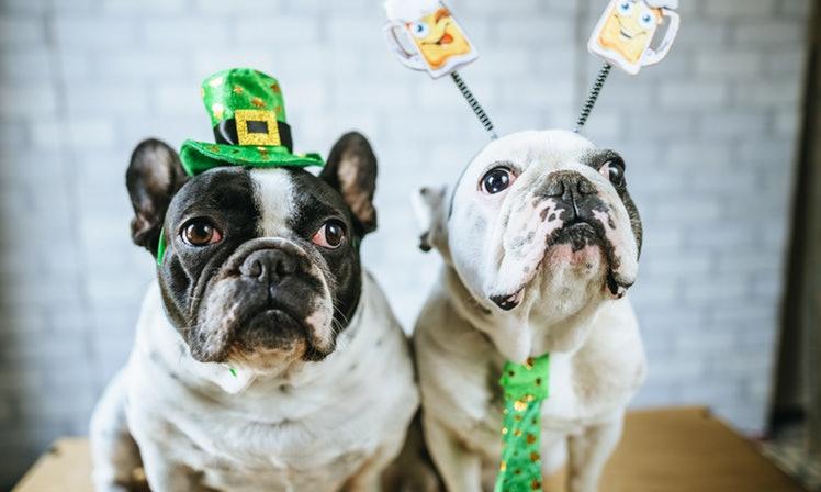 St. Patties Day Pugs