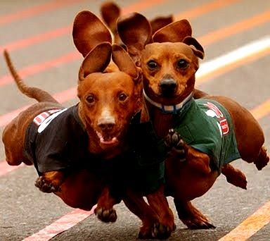 2018 Weiner Dog Race @ Lucky Dog Charlotte