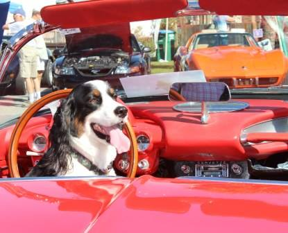 CALLING ALL COOL CARS! You Bring The Cars And Weu0027ll Bring The Craft Beers!  Come With Or Without Your Canine And Enjoy The Fun!