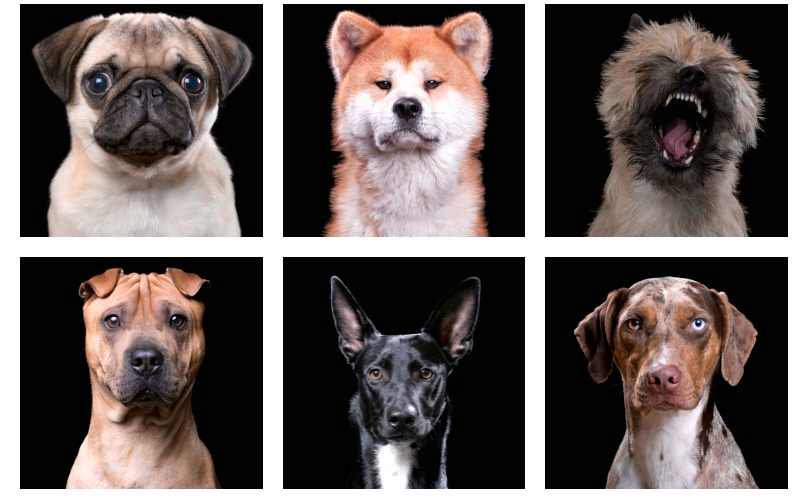 Doggy Headshots 2