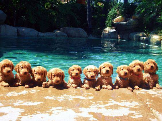 CBHBB Alumni Furever Homes Pawty! @ Lucky Dog Charlotte