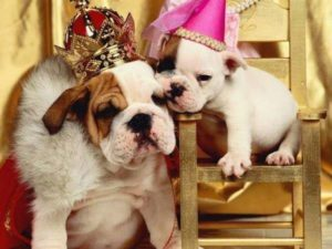 2020 Annual Bulldog Beauty Pageant @ Lucky Dog Bark and Brew Charlotte