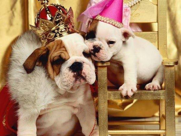 2019 Bulldog Beauty Pageant @ Lucky Dog Bark & Brew Charlotte