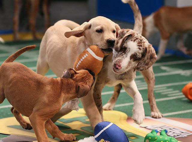 3rd Annual Puppy Bowl! @ Lucky Dog Bark & Brew Charlotte