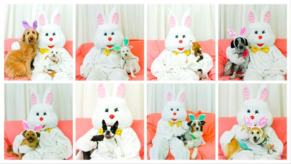 Easter Bunny Photos with CBHBB - Charlotte @ Lucky Dog Bark & Brew Charlotte